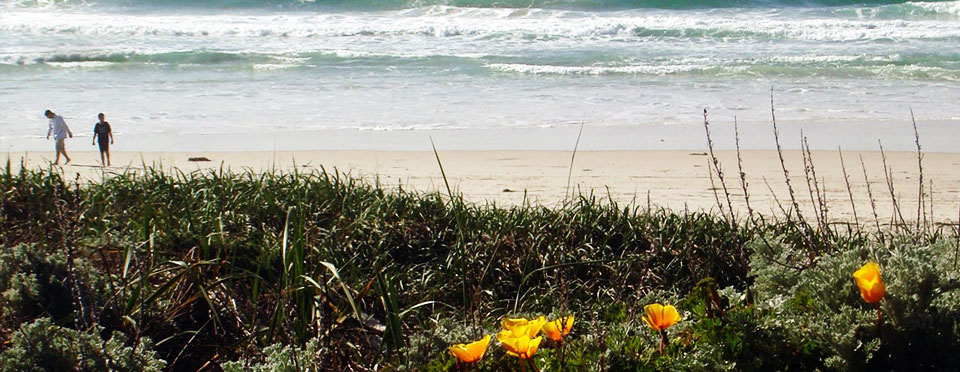 Monterey Peninsula Visitor Guide